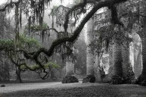 Oak Limb At Old Sheldon Church By Scott Hansen Featured On The Smithsonian Website